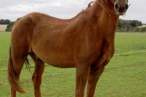 World's oldest horse dies