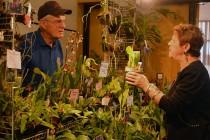 Orchid show vendor
