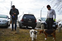 City leash by-laws of little concern, dog owners say
