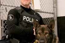 Windsor Police introduce new dog officer