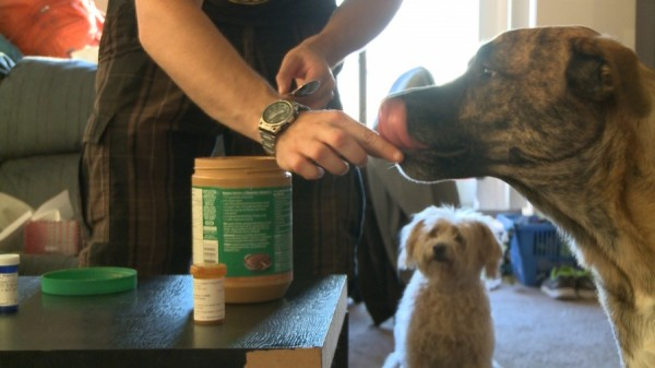 Drake Baird gives his dog Braxton a daily antibiotic for kennel cough. The antibiotic lasts ten days. (Photo by Alyssa Horrobin)