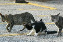 Voucher for Feral Felines